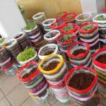 2015-5-27夏野菜2